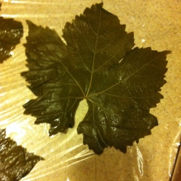 Lay your leaves out vein-side up.